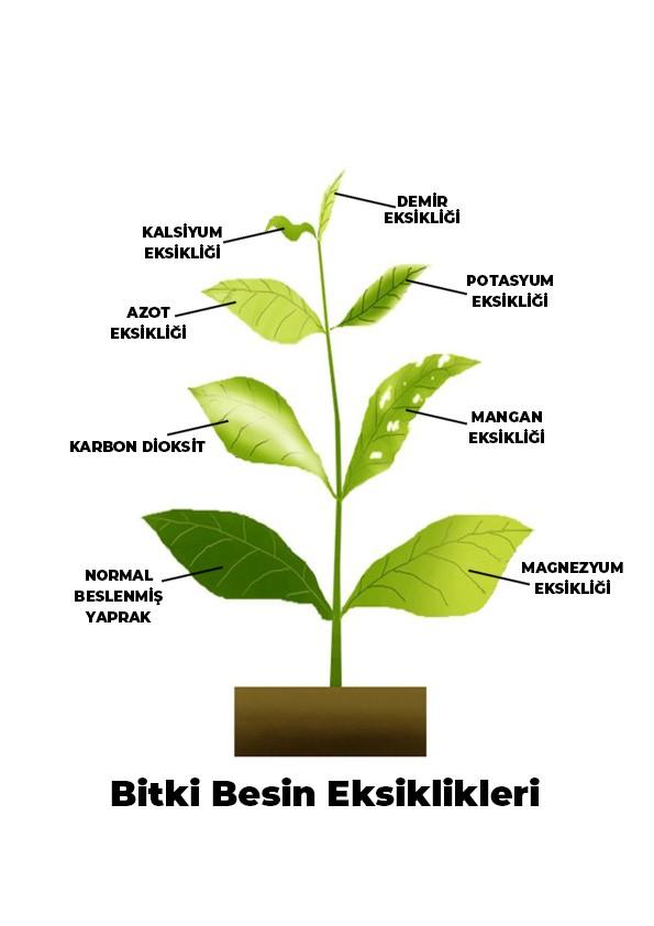 Bitki Besin Eksiklikleri